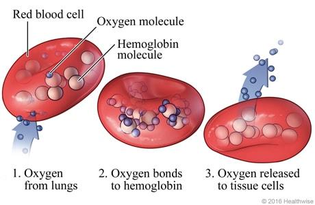 Oxygen Importance